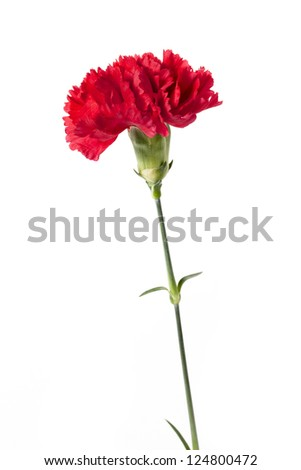 Vertical image of red carnation against white background