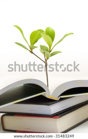 Vertical image of small plant growing out of an open book