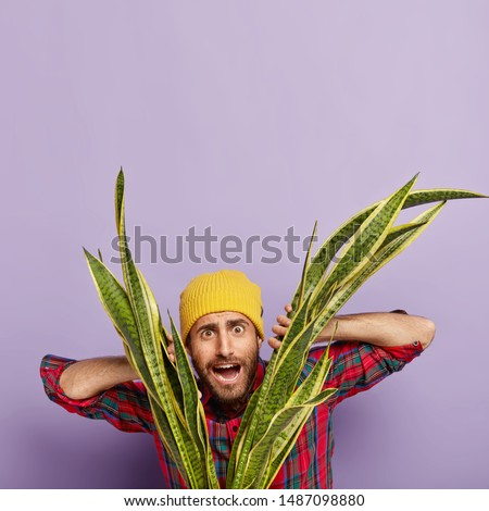 Vertical image of surprised puzzled male florist looks through leaves of green snake plant, takes care of houseplant, likes his job, wears yellow headgear and checkered red shirt, poses indoor