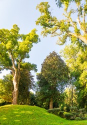 Vertical image of various green  trees  in dendrological park in Shekvetii. Georgia.2020.