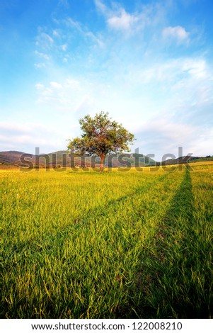 vertical landscape alone tree in clear green and blue nature