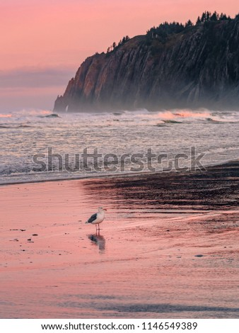 Vertical landscape of the Pacific Coast in Manzanita, Oregon. Seagull standing on the beach at low tide. Waves crashing down on the shore at pink dawn. Mountain and cliffs in the background.