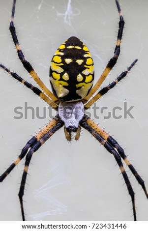 Vertical macro photo directly over the top of a yellow and black garden spider #723431446