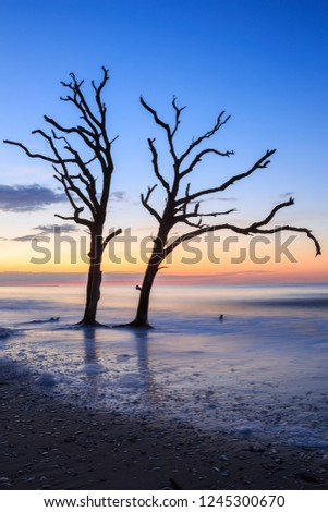 Vertical of two lone trees in the surf of the ocean at Botany Bay, Edisto, South Carolina.
