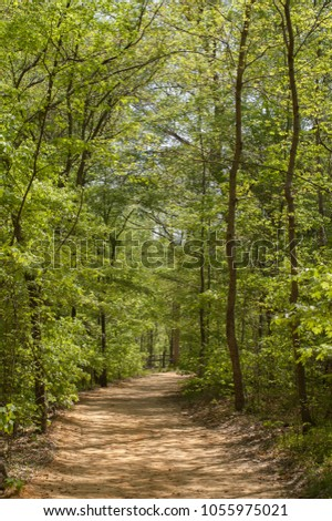 Vertical photo of a footpath through green leafy trees
