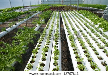 Vertical photo of environmentally friendly hydroponic greenhouse with lettuce growing - stock photo