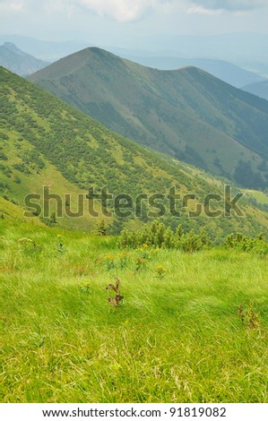vertical photo of green hills during summer