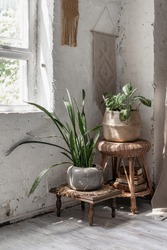 Vertical photo of house plants in flower pots basket standing near window, against white copy space wall on chair in bright room with retro style interior