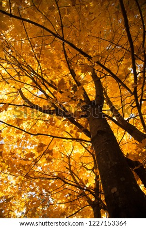 vertical pic of autumn tree, vertical pic of fall tree