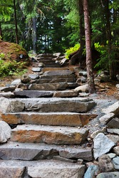 Vertical picture of stepping stone steps in a forest area