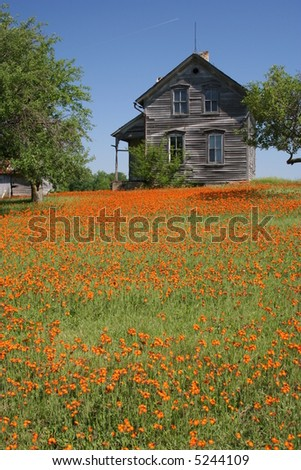 vertical rustic farmhouse with orange flowers