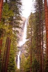 Vertical scenic landscape with waterfall, rocks and large sequoia in Yosemite valley, Yosemite national park, California, USA. Travel tourism hiking destination. View of waterfall in cloudy foggy day.