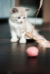 Vertical shot of white cute kitten sadly looks at a toy.