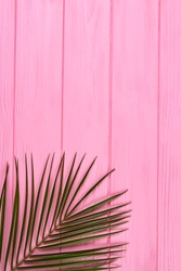 Vertical shot palm branch with thin leaves. Pink wooden background.