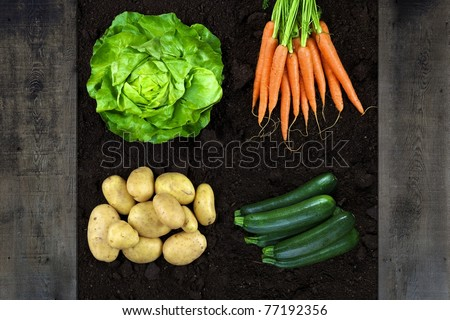 vertical shotot of vegetables