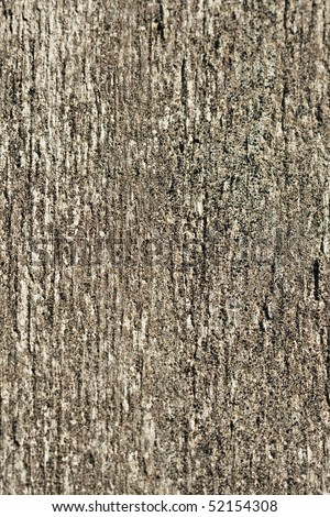 Vertical textured tree bark background