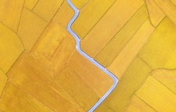 Vertical top-down view of a beautiful patchwork field with a curvy country lane winding through the rice paddies in the season of golden harvest, in Yilan (Ilan), Taiwan, Asia