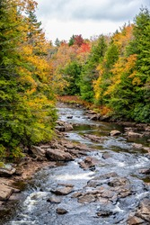 Vertical view of water at Blackwater creek river in Davis, West Virginia in state park with colorful autumn fall maple tree foliage background