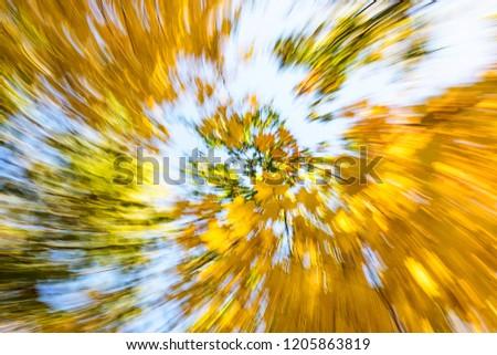 Vertigo, Dizzy, Tree impression, Illness, Swirl/Autumn Swirling Trees #1205863819