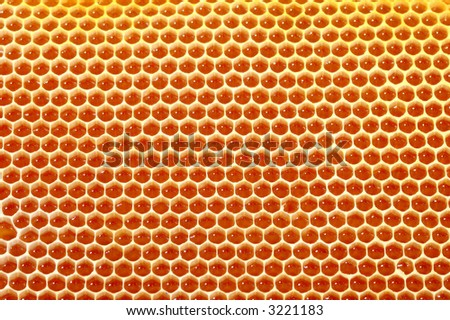 very beatifull honey cells background