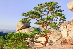 very beautiful bonsai pine among stone boulders in the rays of the setting sun against the background of mountains, tourism, rocks, landscape, siberia, southern ural