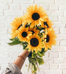 very beutiful sunflowers with white background walls