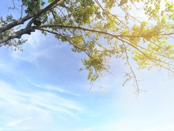 very bright, soft shot of branches of big tree in front of beautiful sky in dark and light blues, with sunlight at right above corner and copy space provided below, for use as background