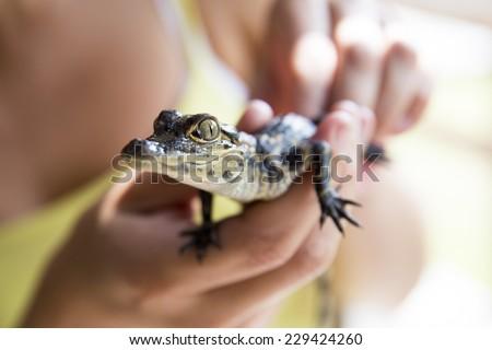 Free Photos Baby Gator Avopix Com