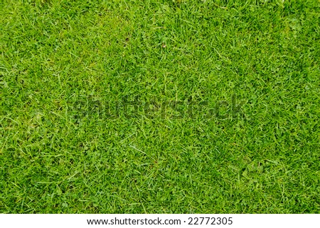 very detailed golf-green grass texture close up view