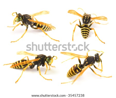 Very detailed Wasp set