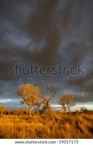 Kruger Dec 2010