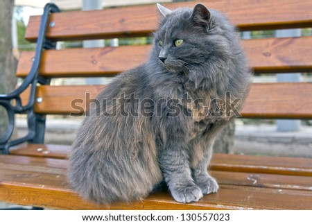 Very Fluffy Very Fluffy Cat Sits on a