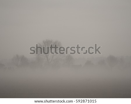 very foggy landscape at afternoon with trees and cloudless sky #592871015