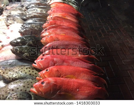 very fresh red grouper fish, this fish is a mainstay of the city of Bitung in marketing fish, this fish is so delicious to be eaten by burning or making gravy
