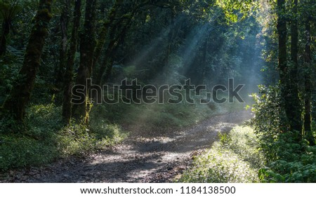 very lush and beautiful rainforest with sunlight #1184138500