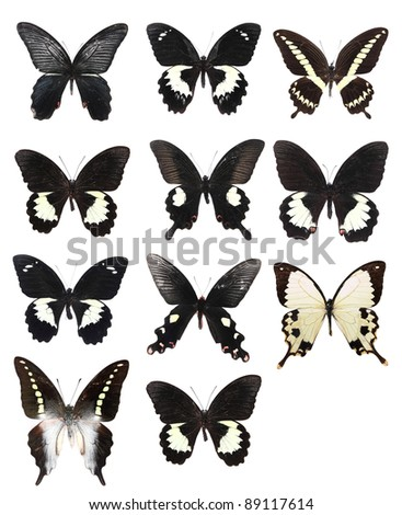 Very Many black butterflies isolated on white background