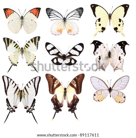 Very Many white butterflies isolated on white background