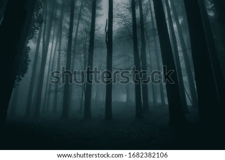 very mysterious and desolate atmosphere on a gloomy day in the dark woods with thick fog