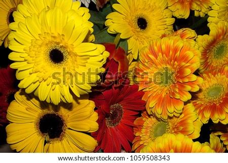 very nice colorful flowers in the sunshine #1059508343