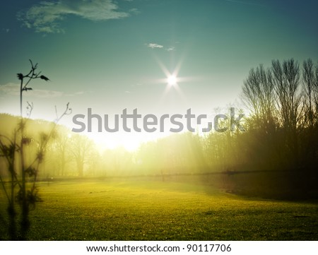 very nice nature background. backlit shot, clear sky {shot on PaseOne P45}