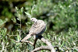 very nice turtle dove bird on top a tree