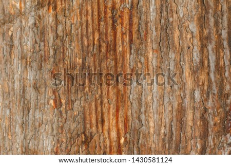 Very old ruined wooden board texture. old wooden background with scratches and dust. Scratched raunchy wood flooring with lacquer peeled off