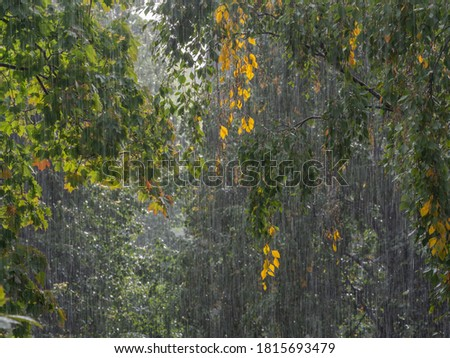 Photo of  Very strong downpour with the tree foliage on the background