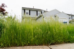 Very Tall Grass of Vacant Abandoned Town Home