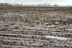 Very wet agriculture clay field with puddles of water due to the rain. It is a cloudy day in the Dutch winter season now.