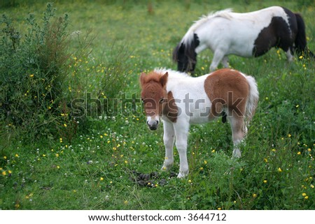 Very young foal with mother