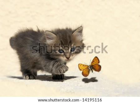 very young kitten hunting a butterfly