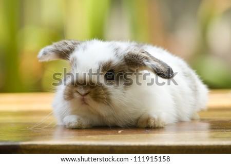 Very young rabbit on wood floor in the garden