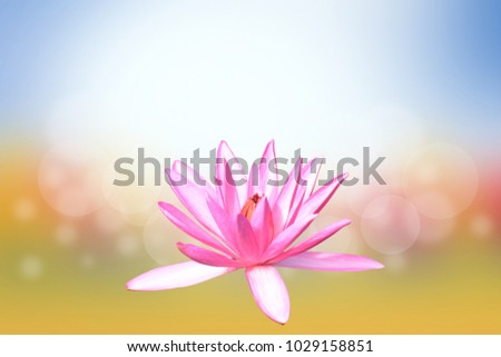 Vesak day, Buddhist lent day, Buddha's birthday worshiping.lotus flower background blur flower and sky light shine. #1029158851