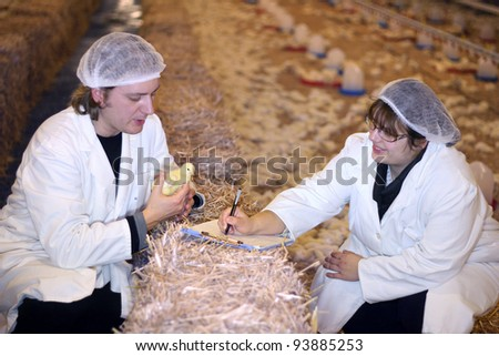Vet and Farmer on Chicken Farm